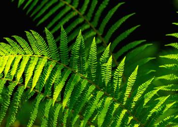 Naturopatia Integratywna